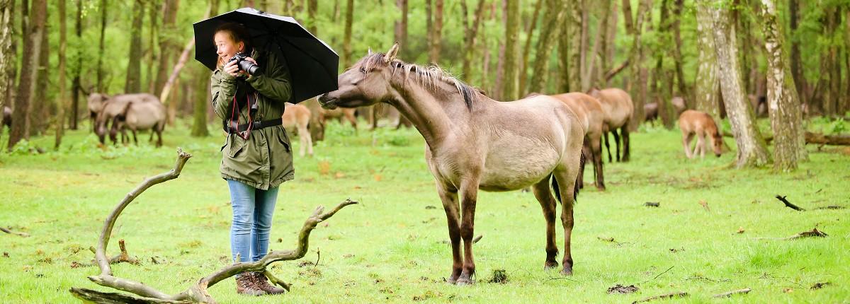 Masterstudiengang Pferdewissenschaften