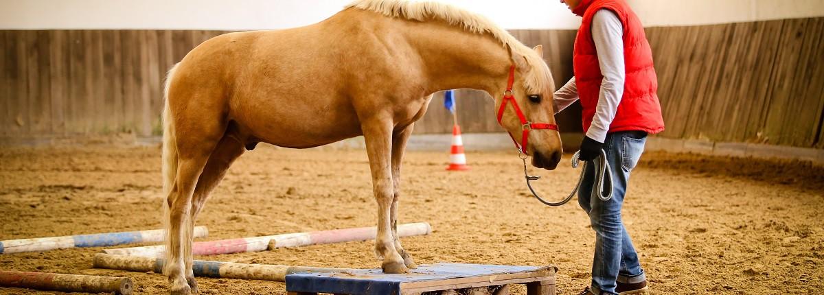 AG Pferd